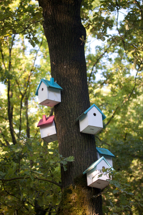 Example of 5 bird houses attached to the trunk of a large tree.