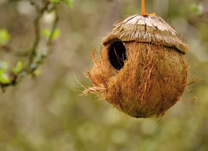 Coconut bird house. Here's a unique, but simple concept for a bird house - turn a coconut into a bird house.