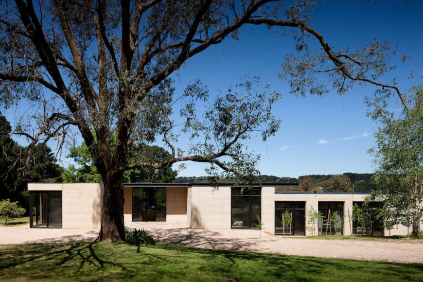 """This """"plane"""" tree outside the primary bedroom helped determine the orientation of the home. Low profile structure helps with efficiency and environmental compatibility."""