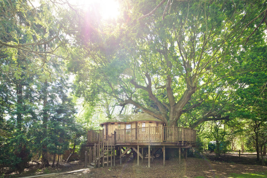 The treehouse exterior showcasing the true height and breadth of the oak tree and the sunshine dappling the top of the treehouse.