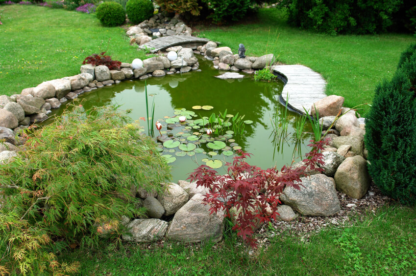 A green garden pond with small maples growing along the widest side. A small stream connects to the pond and can be crossed via a small wooden footbridge.