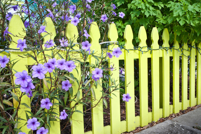 A pale yellow perimeter fence with trees and light purple flowers peeping through. Wrapped around the top of the fence are icicle and tube lights.