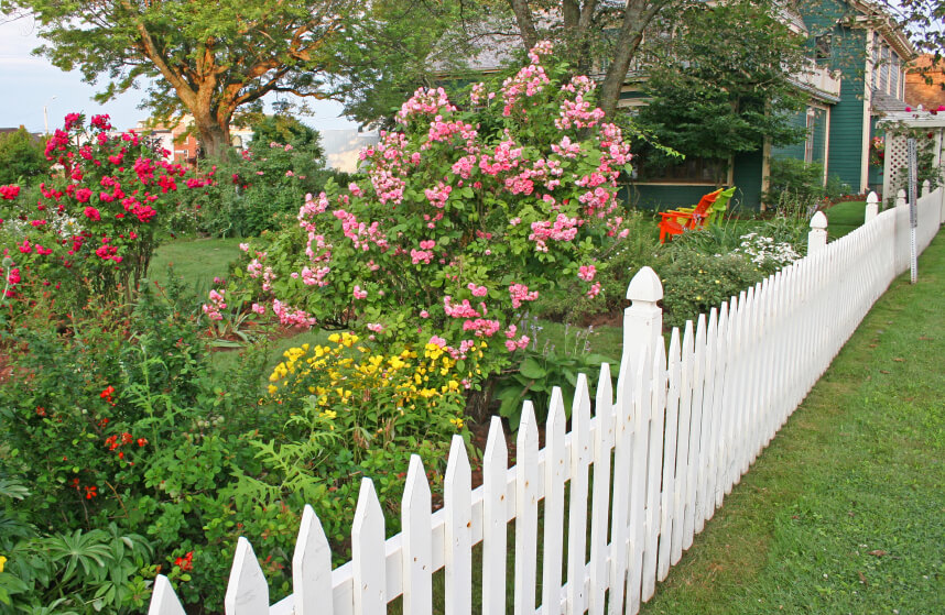 A long, white picket fence with beautiful landscaping along the length of it. The tall bushes and trees help shade the yard from prying eyes.