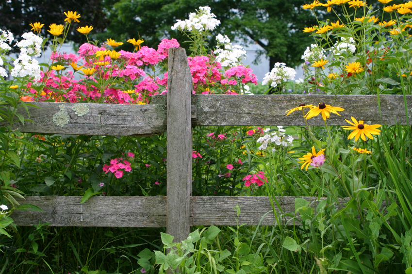 An old rustic fence with weather damage and a bright array of wild flowers popping up all around it.