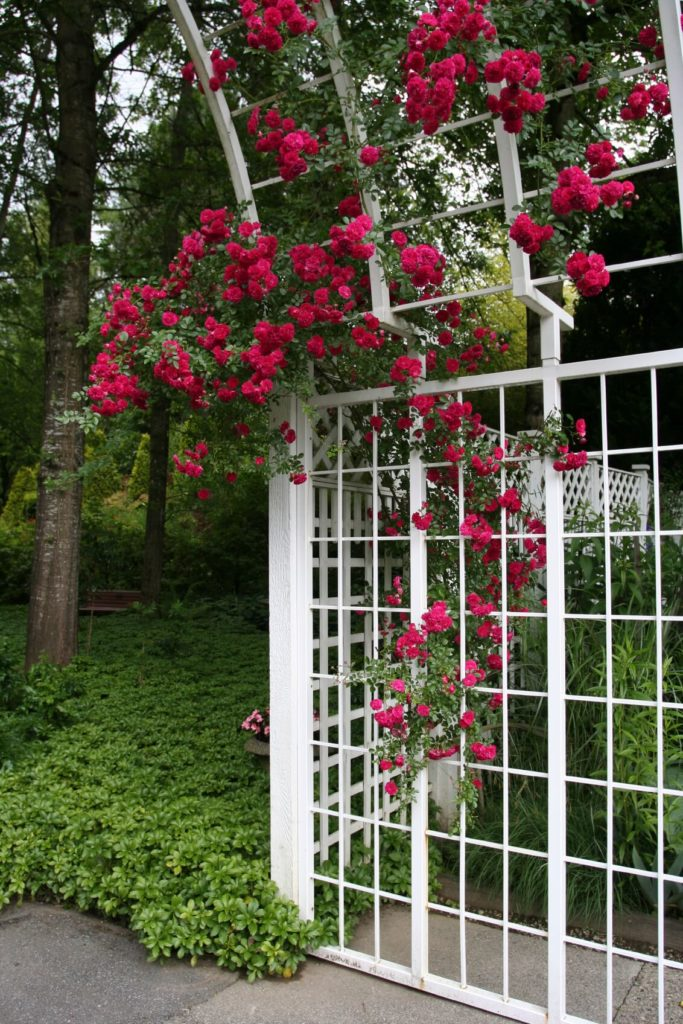 This metal trellis and lattice span the length of the patio.