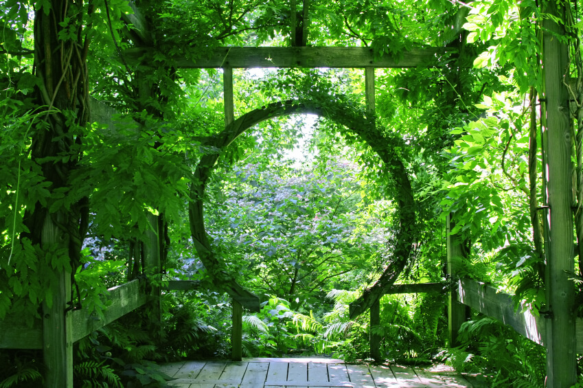 A circular, wooden trellis will continue to grow over and create a tunnel of greenery.