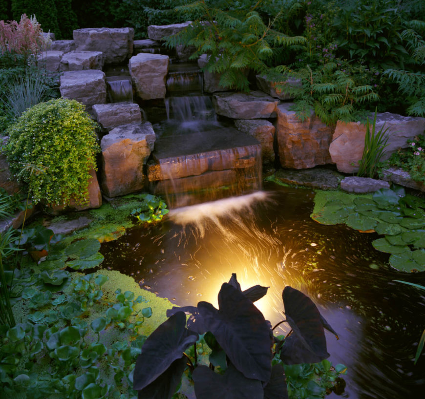 A final look at the pond at night. The algae and other water plants encircle the center of the pool, where it is deepest.