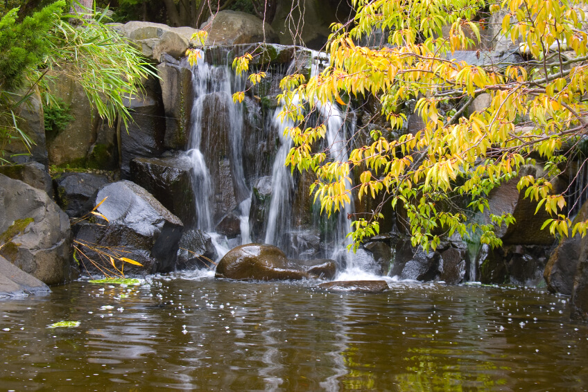 In larger public gardens, garden waterfalls more closely resemble natural waterfalls, including the enormous boulders. Tree branches hang over the water, reflecting in the murky pond surface.