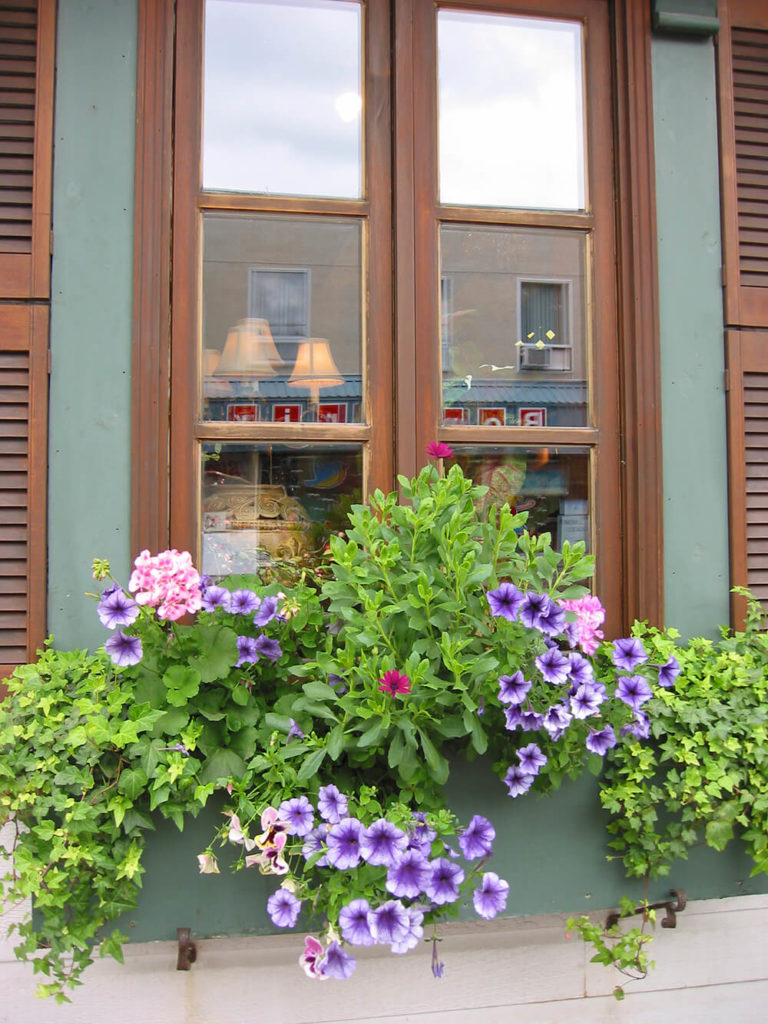 A simple dusky blue window box with small wrought iron hooks fixed below it on the clapboard siding. Violet petunias and ivy spill over the sides.