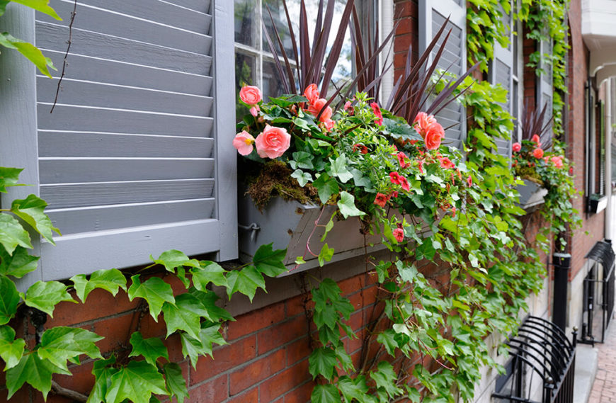 This wooden window box hooks into the sides of the window and is slanted to encourage the plants to meet the vines already creeping up the brick facade