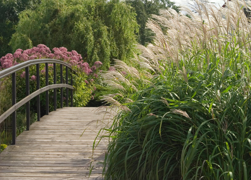 Thick grasses along one side of this wooden bridge completely cover one of the railings.