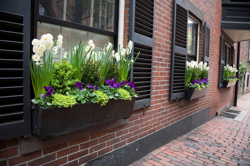 These slanted wooden window boxes are filled with greener, pansies, and elegant white orchids.