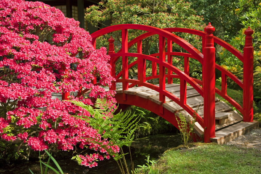 There are no signs of weathering on this gorgeous red arched bridge. Even more stunning are the magenta flowers on an ornamental tree hanging over the water.