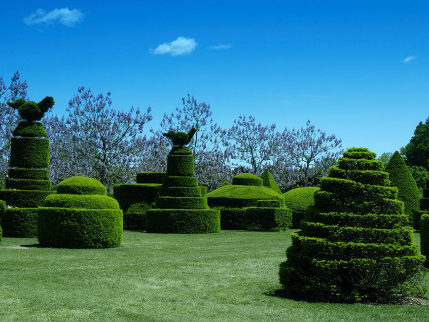 Sculptured hedges are a great substitute for the traditional hedge, or sculpture even. A hedge can be shaped into anything that may suit the needs of your particular space.
