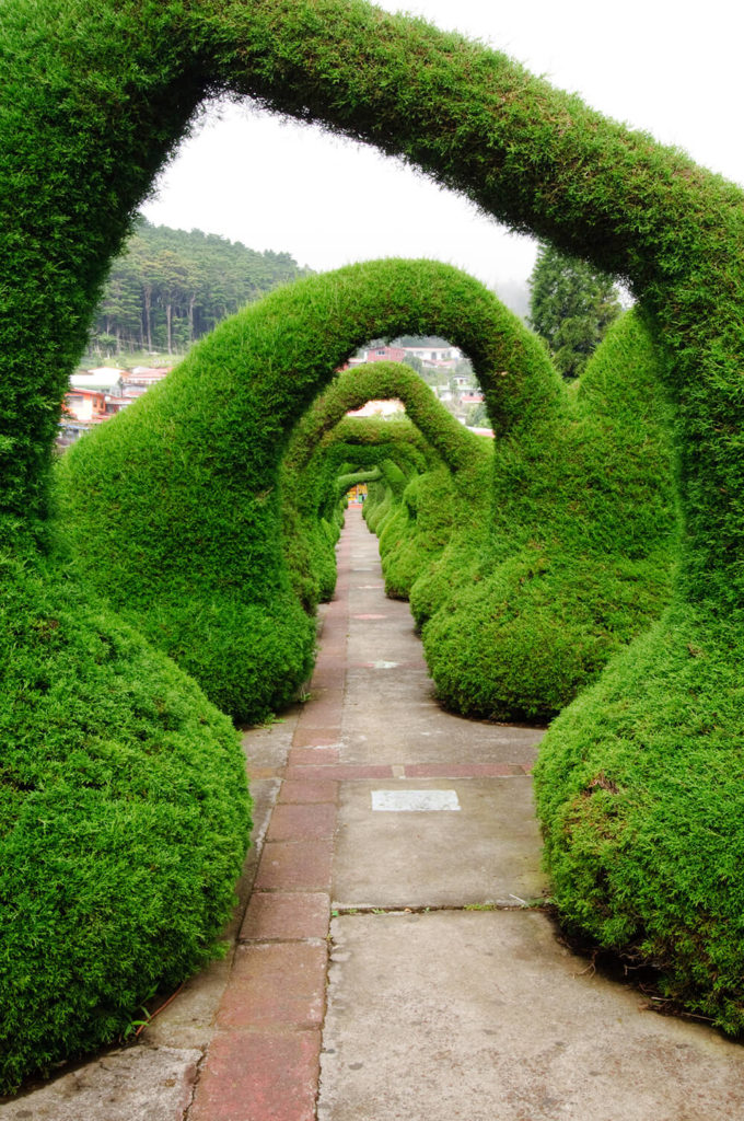Organically shaped, these hedges create an interesting and eye-catching arched pathway.