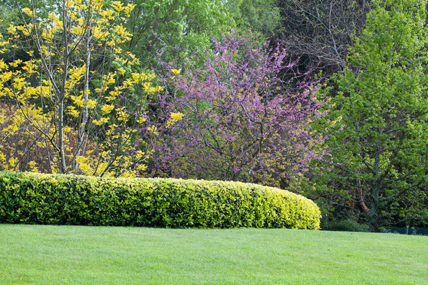 This rounded hedges offers a lovely edge to this lush green lawn. The contrasting light and dark of the leaves balances the change in shades the surrounds the hedge.
