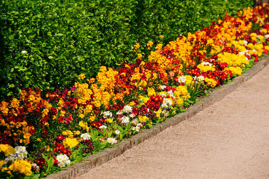 These colorful flowers, backed by an orderly hedge forms a lovely mini-border along the side of this path. Using brightly color flowers can add interest to a bland hedge.