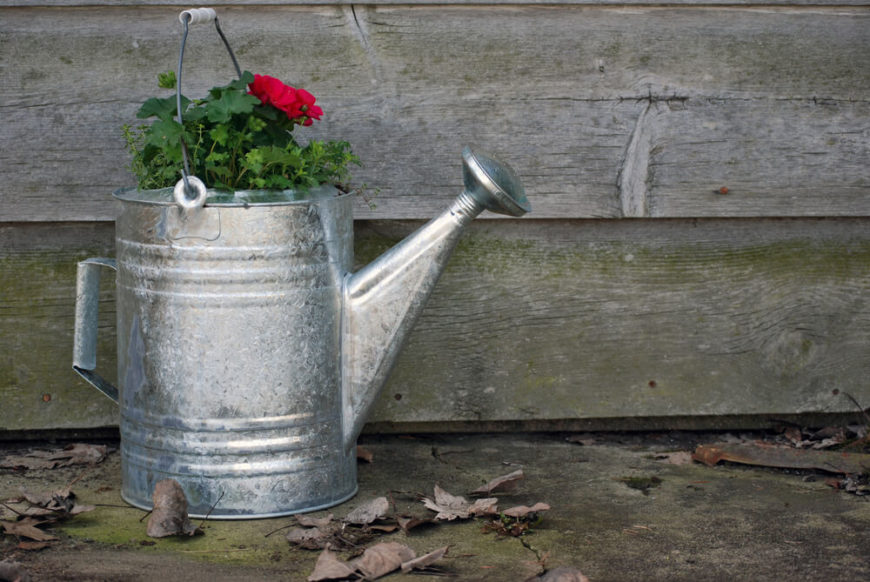Galvanized watering cans make great planters, just make sure to poke some holes in the bottom to allow for water drainage.
