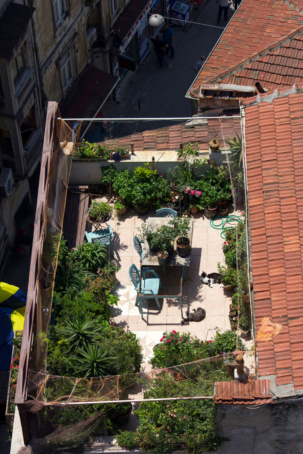 A rooftop patio viewed from above, showing the sheer amount of planters and ornamental trees occupying the majority of the space.