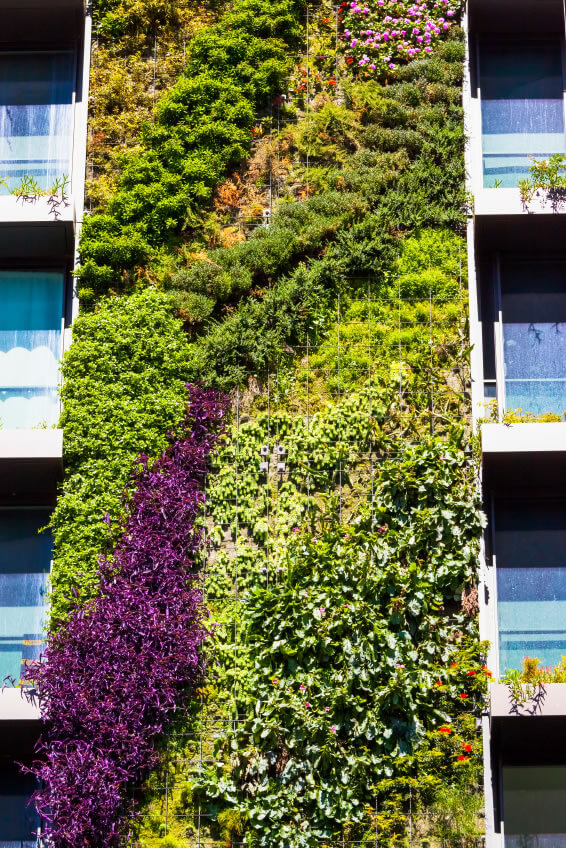 Along with all of the practical benefits of green walls - savings on energy costs, providing animal habitat, et. al. - the beautiful splashes of color and texture that spring forth from the walls. Carefully study and planning of which species and varieties to use can provide year-round color.