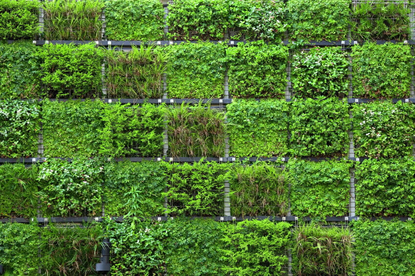 28-vertical-garden Don't say wall gardens cannot be diverse. In this example, the wall's various gardens are sectioned off from the neighboring installation. Fencing allows each variety of plant to grow out of a particular growing area.