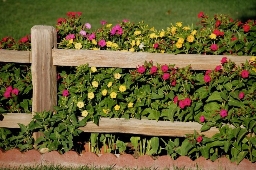 This is a beautiful example of a rough hewn mortised fence in front of a planting bed filled with thick, colorful small blooming plants. The planting bed is edged with a brick scalloped edging, giving it a finished look.