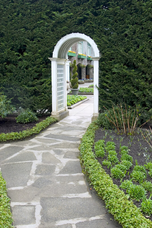 A beautiful white arbor tucked into a massive hedge wall, creating a portal through to the other side of the garden, a large courtyard. Along the flagstone path leading to the arbor are small but thick plants.