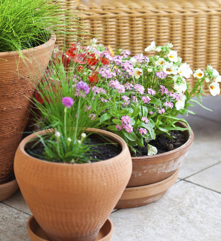 Choosing planters of different heights, textures, and shapes is a great way to add subtle texture to a small container garden.