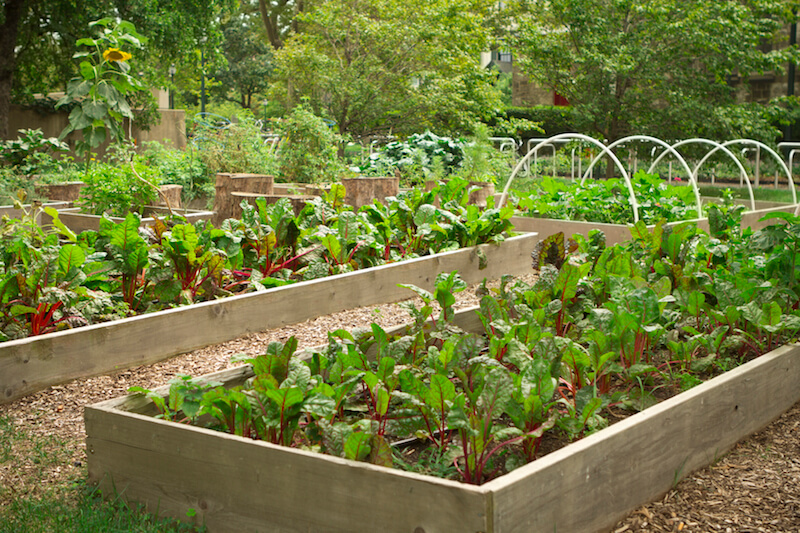 These raised beds make it easier to keep certain plants separate and the soil free from weeds or volunteer plants.