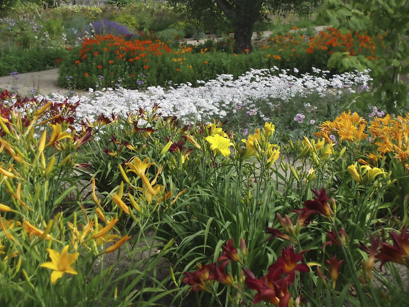 A colorful garden with lovely daylilies, white daisies, and an assortment of other tall flowers.
