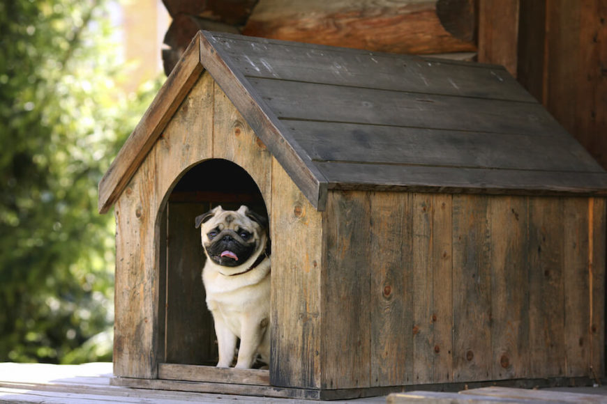 This is a smaller dog house perfect for small breeds, like the pug shown. It's a rustic dog house, but sheltered on the front porch of this log cabin.