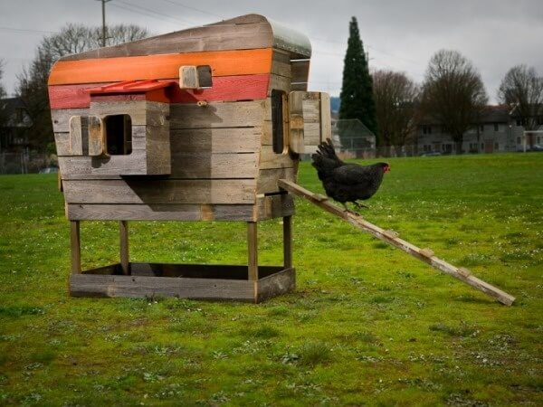 This raised chicken coop is small, perfect for a family with only a few hens. A bit of paint spruces up the otherwise plain wooden structure.