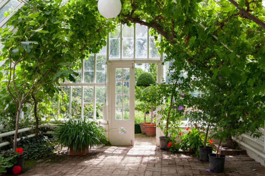 This inside view of a roomy greenhouse shows how you can use the space in a larger greenhouse. The ceiling on this greenhouse high enough to even fit trees.