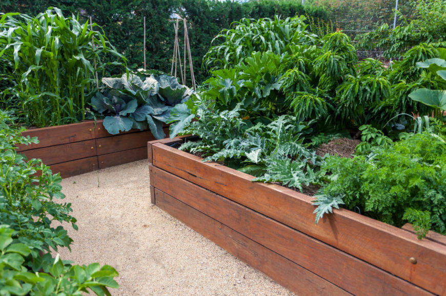 Lush raised garden beds in neat wooden boxes.