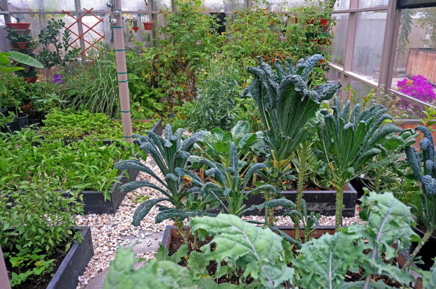 Here are some short and simple raised garden beds in a greenhouse. These are a great and simple way to organize your garden, and loose stones between these beds are a classic walkway.