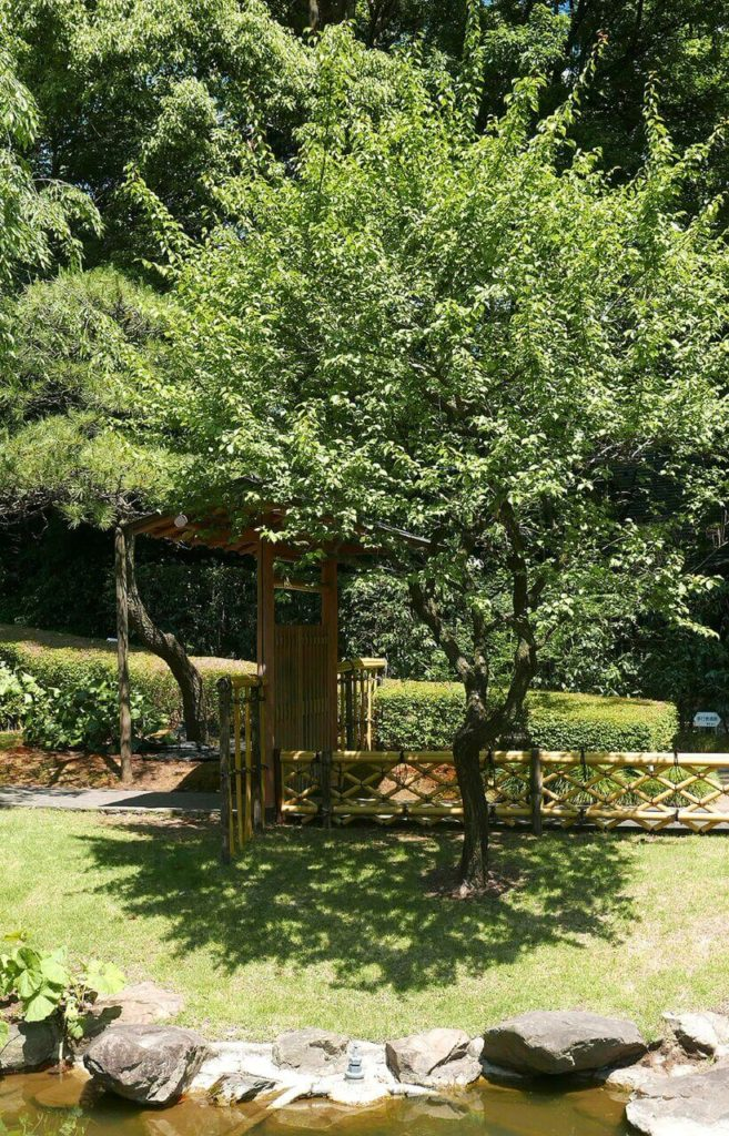 """This is a gate arbor in a distinctly Asian style that provides entry into a Japanese Zen garden. An arched """"roof"""" is shaded by lush trees."""