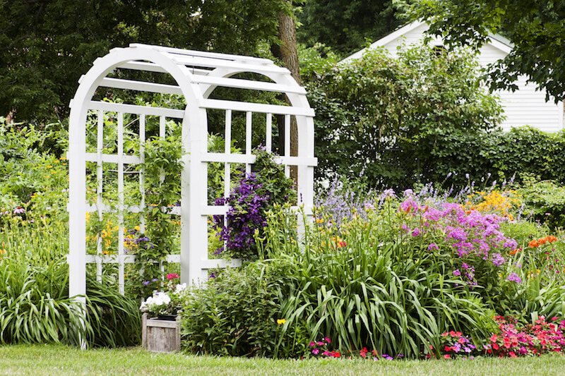This classic white wooden arbor is tucked neatly into a lush garden, providing a portal to another section of yard. Climbing vines with bold flowers are being trained to cover the structure.