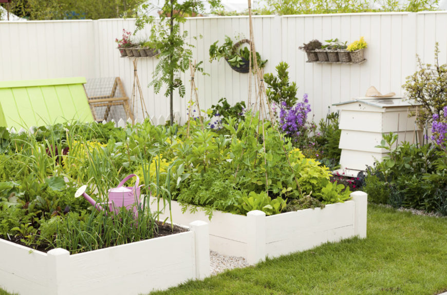 Here is a pretty and well designed garden area. The white raised garden boxes match well with the rest of the yard's design. A vegetable garden does not need to stand out from the rest of your yard. There are plenty of ways to make them blend with your designs.