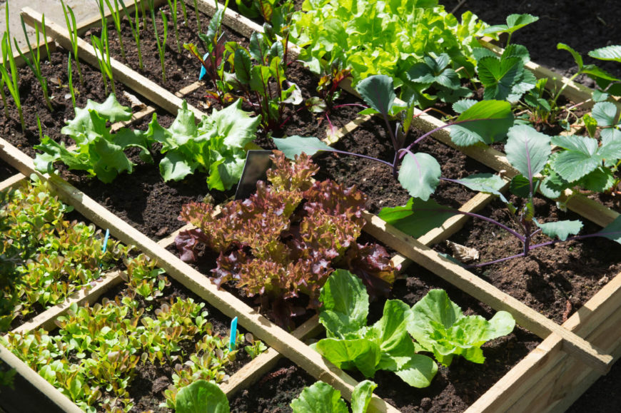 Here is a single box with a variable mix of vegetables, organized by dividers. When you are growing vegetables for a small group, do may not need to have many plants to get the vegetables you need. ONe or two of each plant may be able to yield what you want.