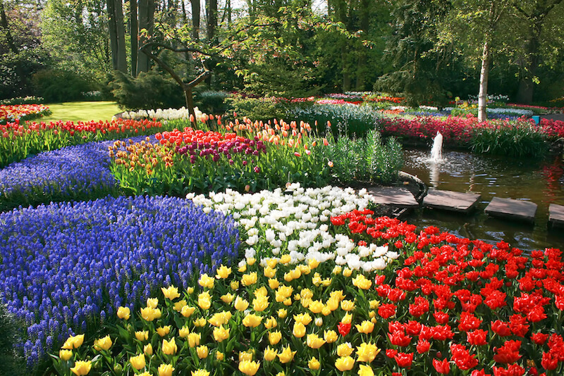 Incredible tulip beds in tons of different colors.