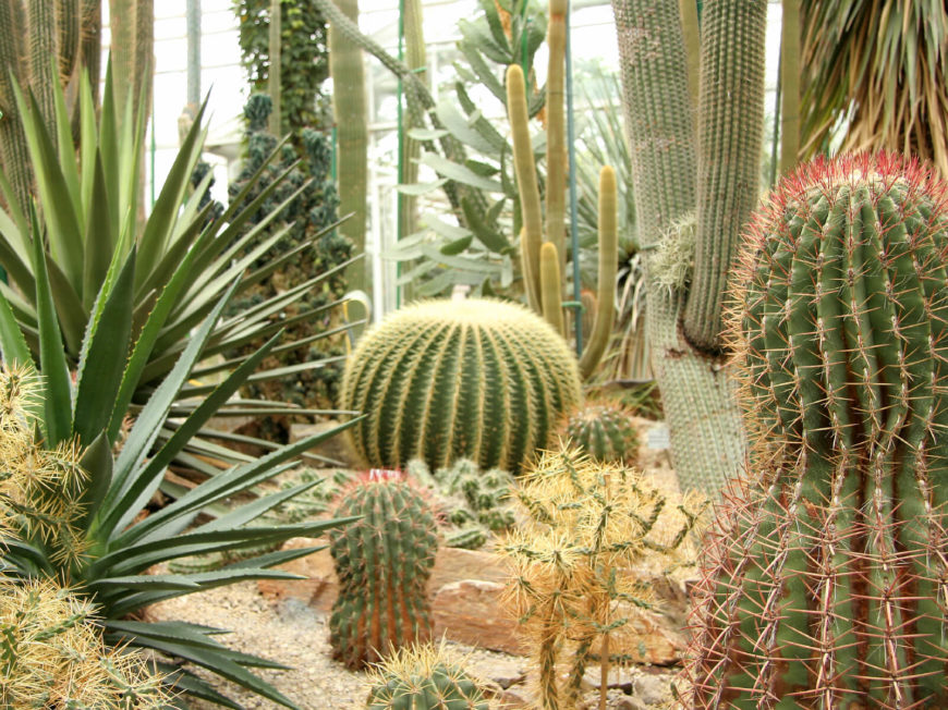 A cactus garden