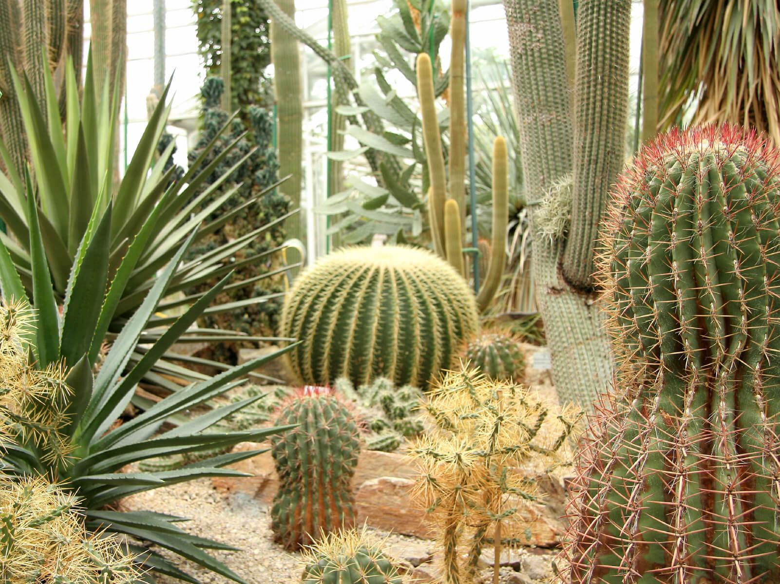 9 Sharp Cactus Garden Ideas