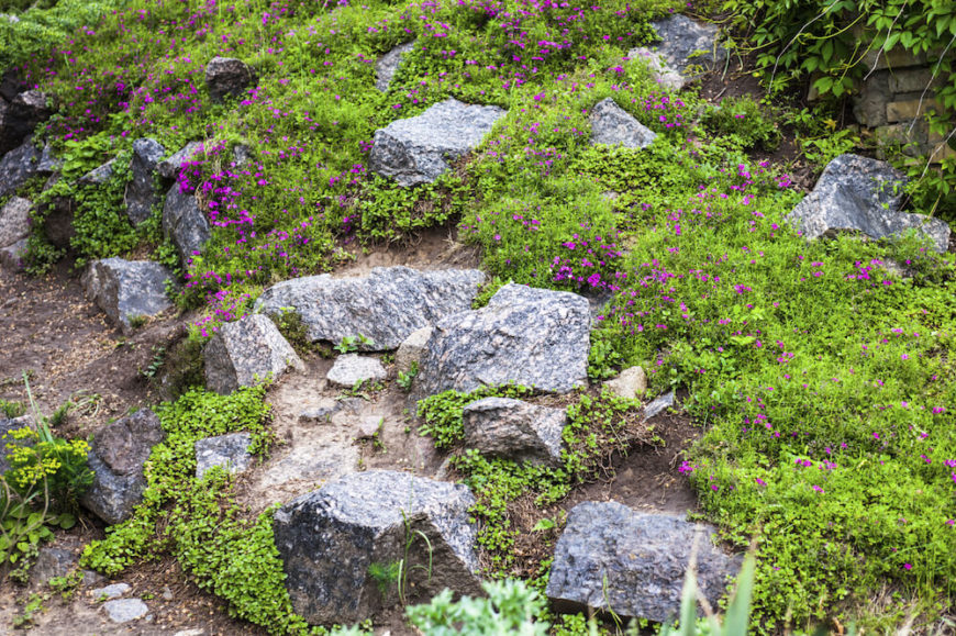 Here we see some blue and white stones being overtaken by greenery. If your stones are far enough apart you can have a variety of plants in your rock garden. Your garden only needs a few rocks spread apart to provide a natural feel and texture.