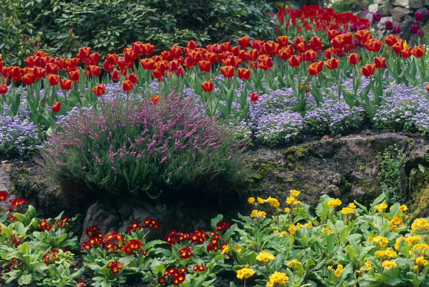Here is a lovely perennial garden with many different layers. This garden mixes tulips, primroses, and creeping phlox to build a deep and appealing composition. Many perennials work together. Don't be afraid to experiment with different kinds.