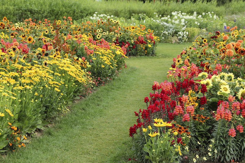 Here are some lovely and lush perennial gardens. These gardens are filled with sunflowers, red and pink delphinium, and yellow daisies; all of which are amazing perennials that can bring a freshness to your garden.