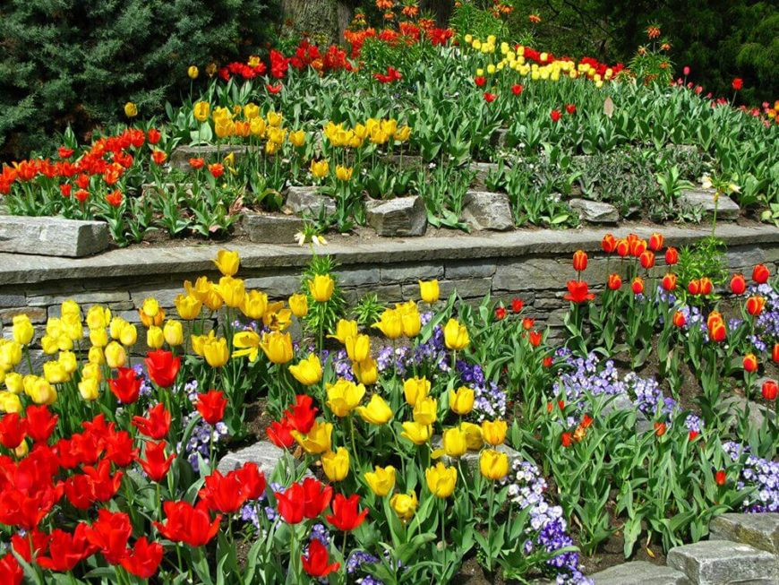 You can create depth in your garden with only two types of flowers. This garden uses tulips with a bright red and yellow draw alongside a number of violets to punctuate the tulips and provide depth.