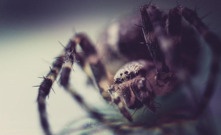 Large gruesome tarantula spider