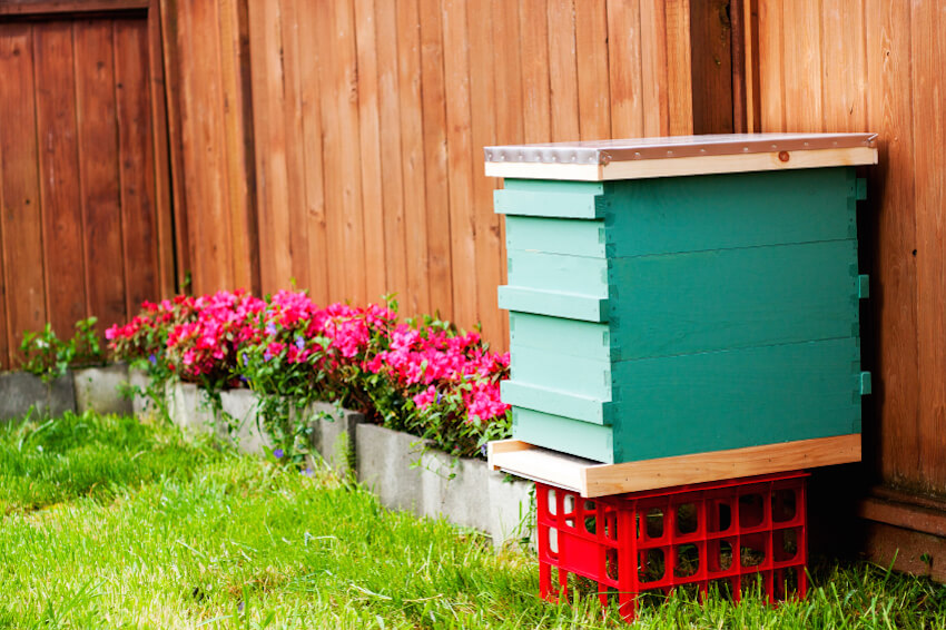 Bright colors and clean edges signal that this beekeeping box is perfect for close inspection in smaller yards. The handsome look makes it a perfect companion to a colorful garden or your carefully tended fence. A metal topped roof makes for increased security.