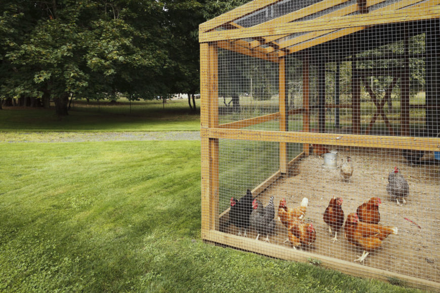 If you've got ample space and live in a temperate climate, a large chicken coop like this might be the best possibility. Using a large hand-built frame of natural wood, the entire structure is wrapped in wire for a transparent, breezy space for the birds.