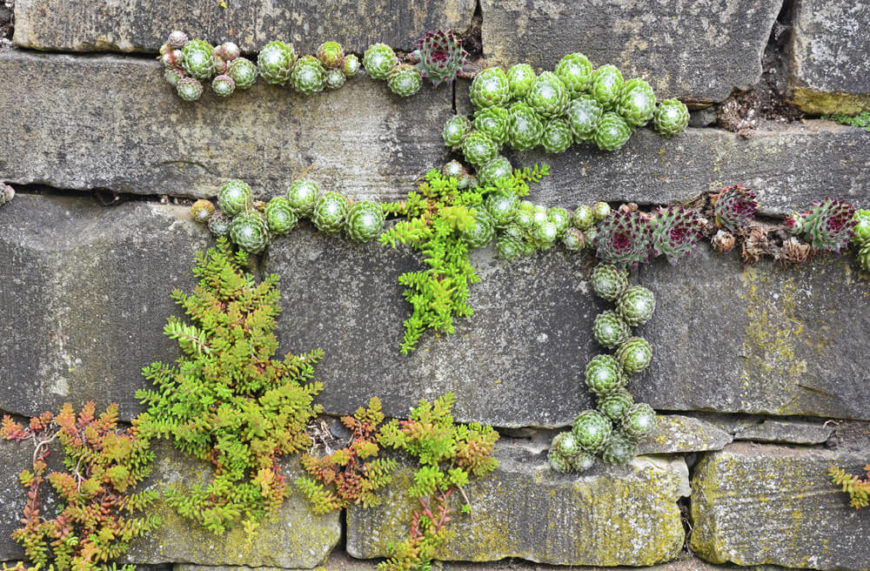 Bring life to your walls with plants. Some plants can even grow within the nooks and crannys of a brick wall. This can give your wall an aged and weathered look.